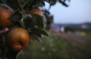 colazione-contadina-taulaluuunga (27)